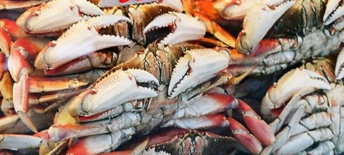 The Republic of Korea Is The Largest Importer of Crustaceans From Primorye Territory